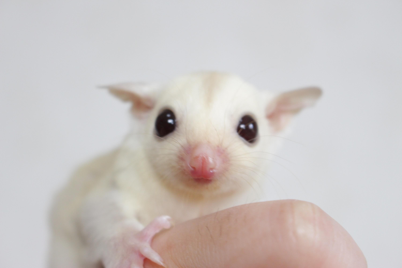 クリミノhetリューシ♀